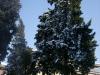 2012-02-neve-quartiere_03