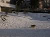2012-02-neve-parrocchia1_25